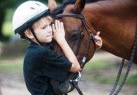 Правила обращения с лошадью