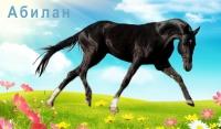 Конь по кличке Абилан
