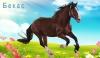 Конь по кличке Бекас